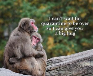 Baboons hugging